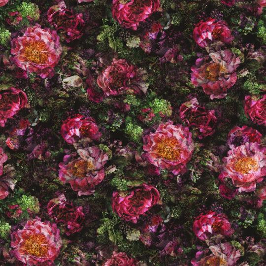 Romaunt Rose — Fuchsia FDG2929_01